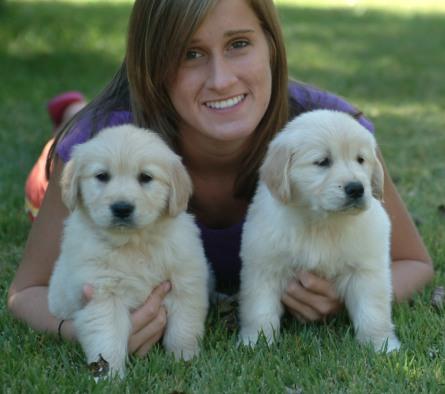 Risas Golden Retriever Puppies Of Kansas